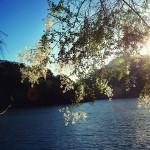 Sun-on-the-water